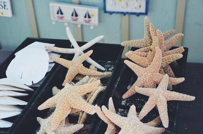 Muscheln und Seestern liegen in Ocean Grove am Jersey Shore zum Verkauf aus