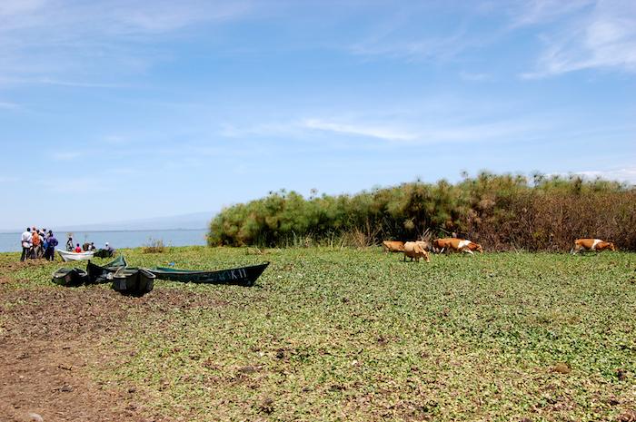 Der Lake Naivasha in Kenia