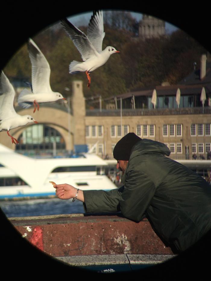 Hamburg Tipps: Möven im Anflug
