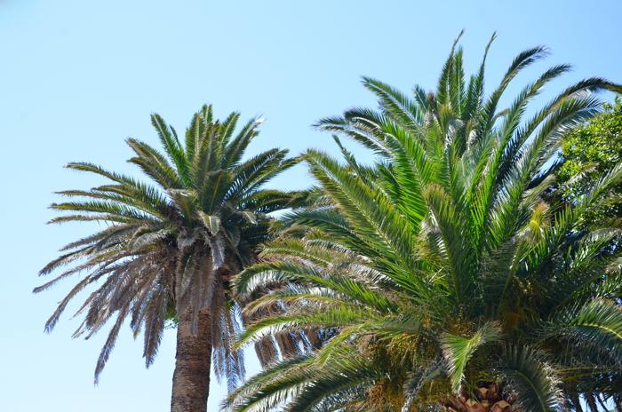 Palmen in Montenegro