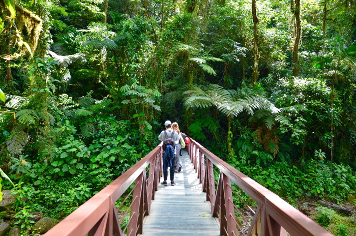 Abenteuer Costa Rica und Pura Vida im Dschungel