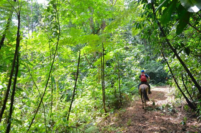 Reiten gehört zum Abenteuer Costa Rica wie das Pura Vida