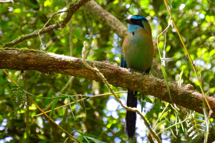 Zum Abenteuer Costa Rica gehört das Pura Vida