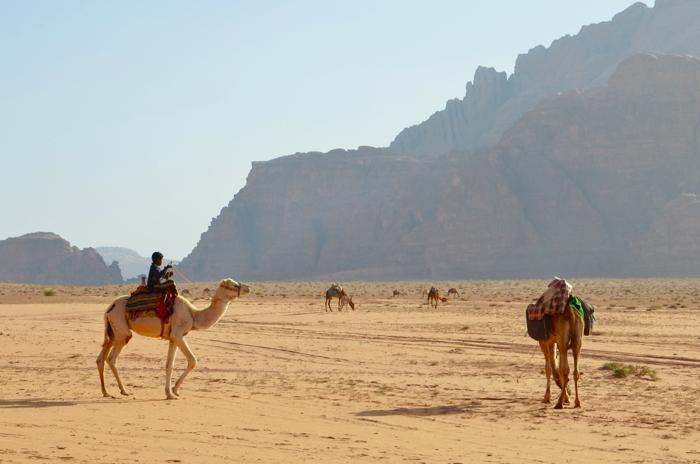 Beduinen mit Kamel im Wadi Rum