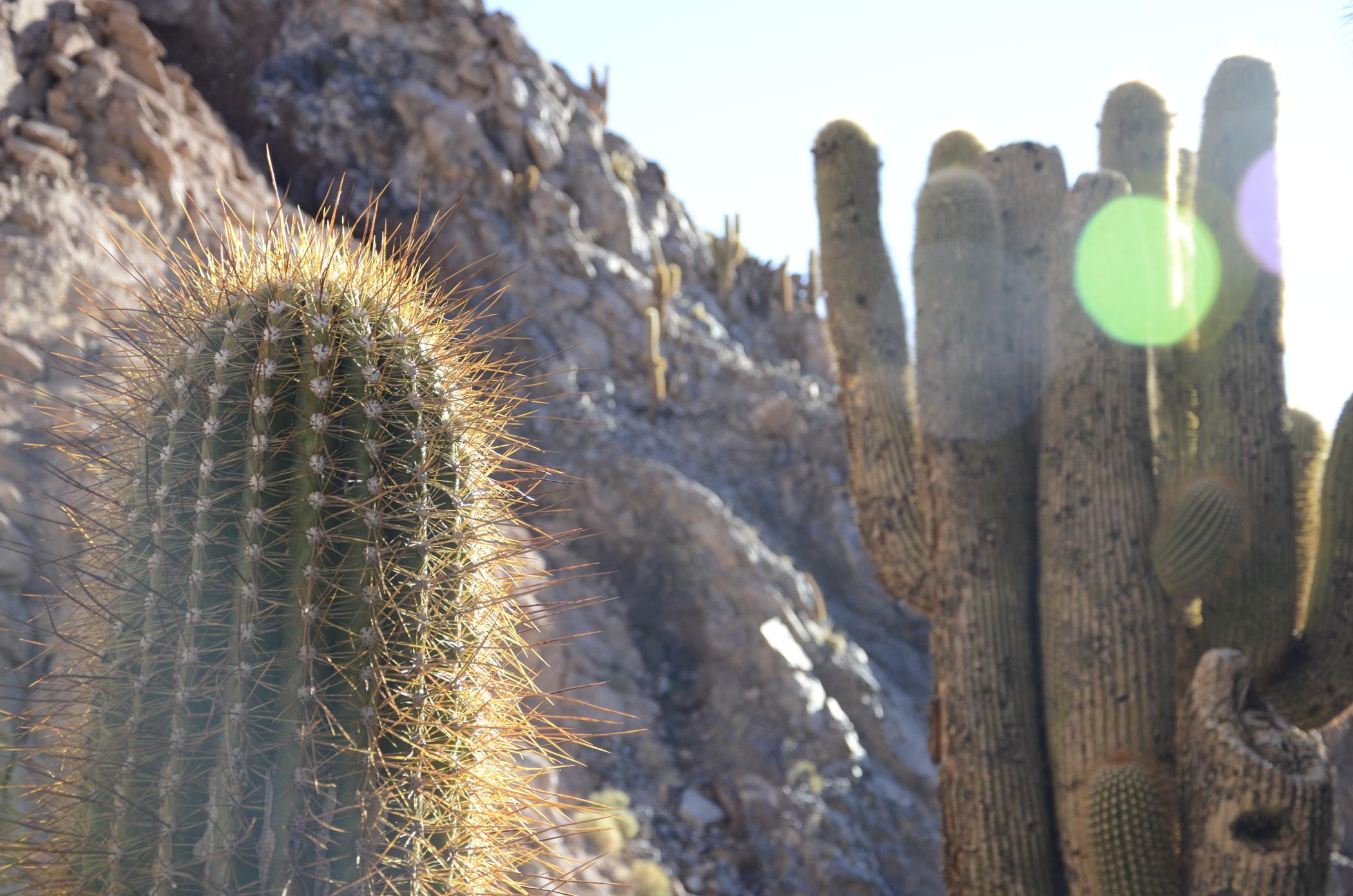 Sehenswürdigkeiten Chile wie das Cactus Valley