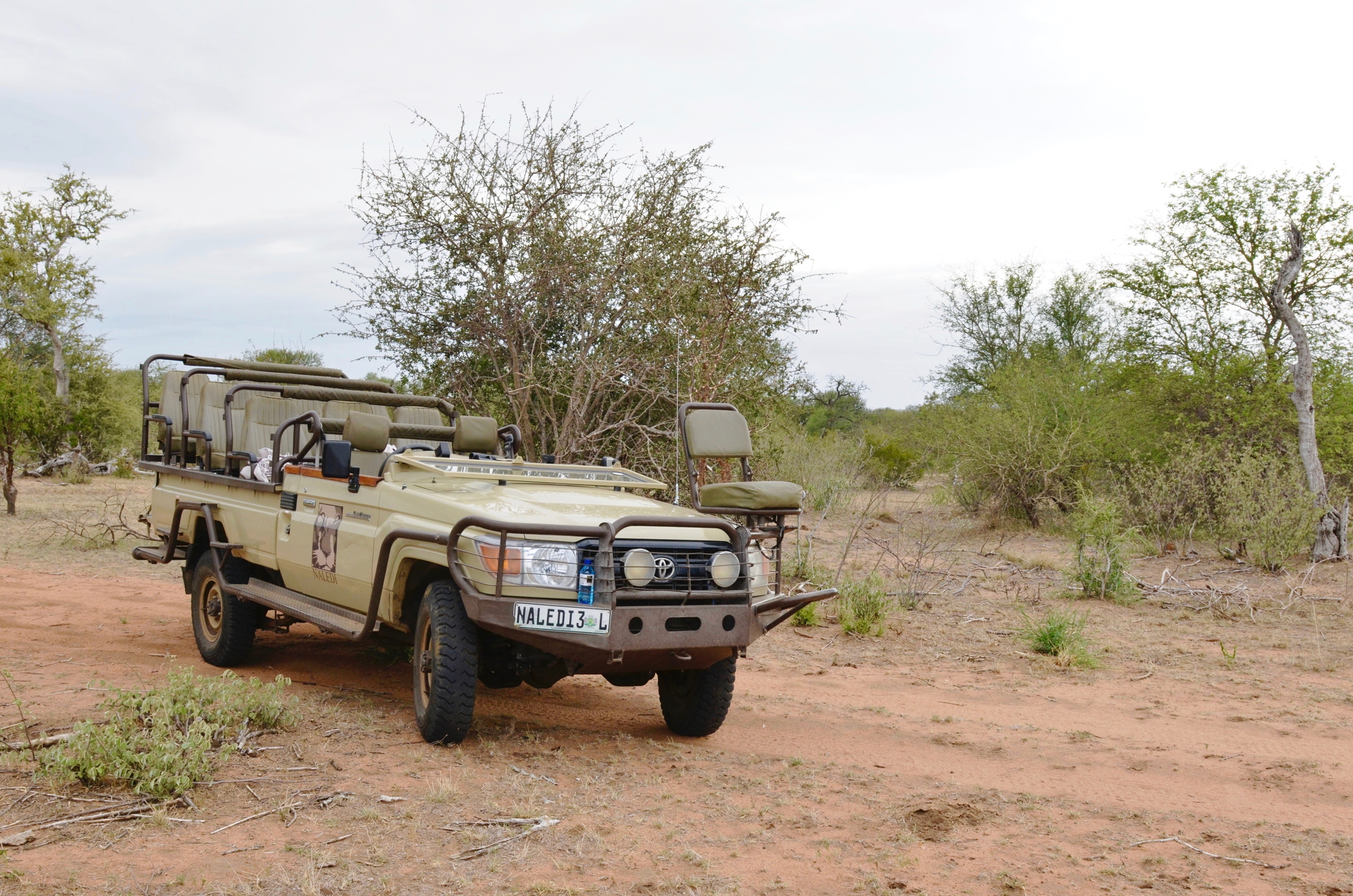 Ein Südafrika Roadtrip mit dem Safariwagen im Nationalpark