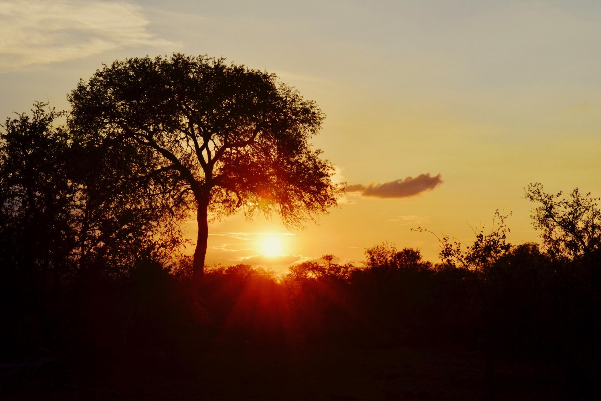 Zum Südafrika Roadtrip gehört eine Safari bei Sonnenuntergang