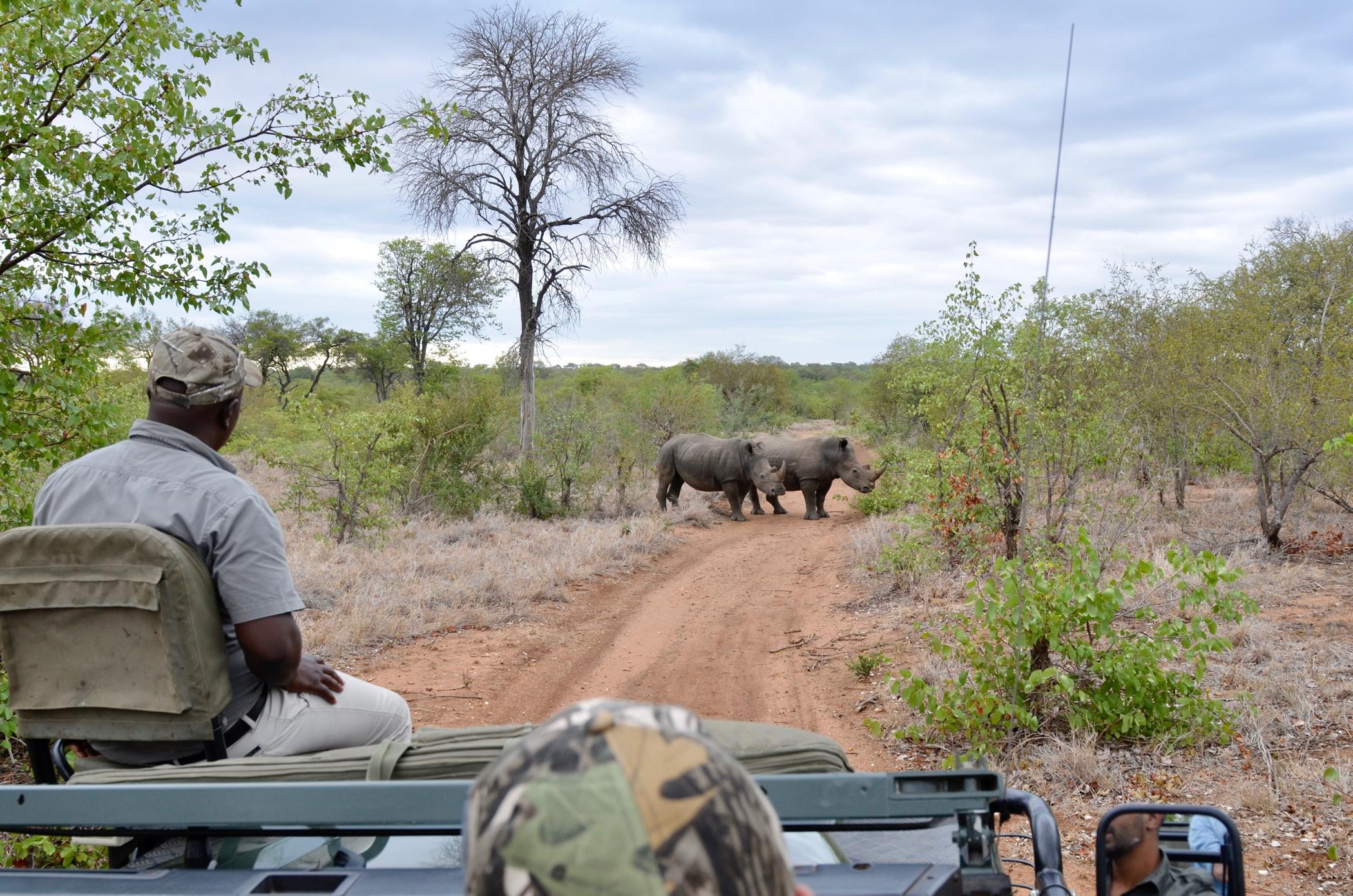 Game Drives auf einem Südafrika Roadtrip