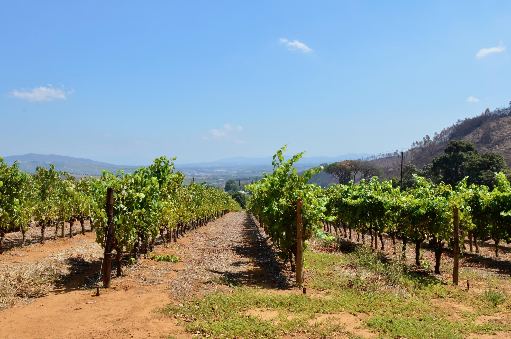 Auf einem Südafrika Roadtrip muss man auch Stellenbosch besuchen